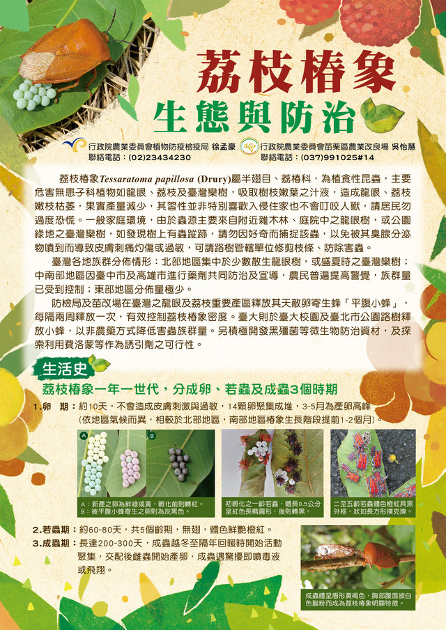 荔枝椿象防治1