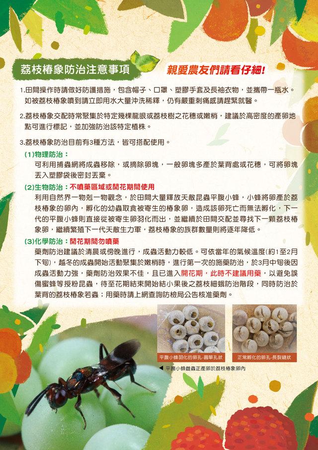 荔枝椿象防治2