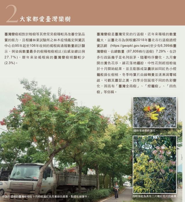 荔枝椿象防治-台灣欒樹篇2